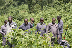 Ranger in Bwindi National Park Stock Images