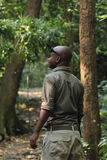 Ranger in the forest of Gombe tracking chimps Royalty Free Stock Photos