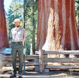 Ranger of giant  sequoia forest Stock Photos