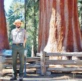 Ranger Of Giant Sequoia Forest Stock Photos