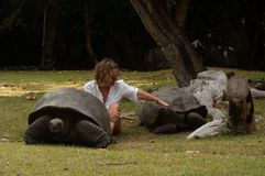Free Ranger Playing With The Seychelles Giant Tortoise Aldabrachelys Gigantea Hololissa In Curieuse Island. Royalty Free Stock Photos - 145227108