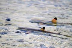 Rangiroa atoll fotografering för bildbyråer