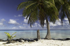 Free Rangiroa Atoll And Lagoon Near Tiputa Pass - French Polynesia Royalty Free Stock Photo - 58613245