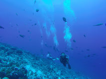 Rangiroa, Französisch-Polynesien lizenzfreies stockbild