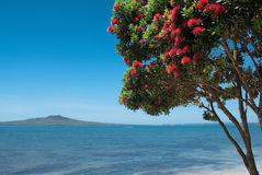 Rangitoto Island with pohutukawa tree in bloom Stock Photos