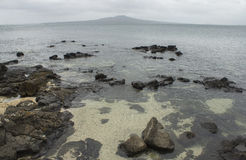 Rangitoto Island View from Takapuna Rocky Beach Royalty Free Stock Images
