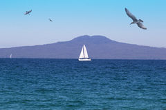 Rangitoto Island from water level Stock Images