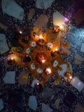 Rangoli gjorde med blommakronblad royaltyfria foton