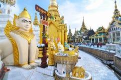 RANGOON MYANMAR - Oktober 11, 2013: Buddistiskt folkbesök Shwed Royaltyfria Bilder