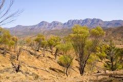 Rangos del Flinders foto de archivo libre de regalías