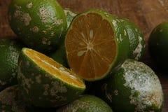 Rangpur limefrukt eller limaocravo i portugisiskt royaltyfri fotografi