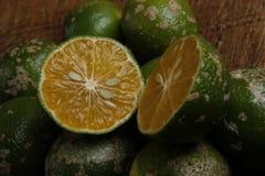Rangpur limefrukt eller limaocravo i portugisiskt fotografering för bildbyråer