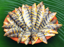 Rani Fish of Indian subcontinent Royalty Free Stock Images