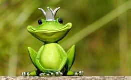 Ranidae, Frog, Amphibian, Tree Frog royalty free stock photography