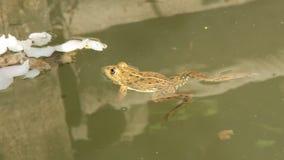 Ranidae - true frog Stock Photography