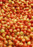 Ranier Cherries in a Fruit Market Stock Image