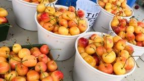 Ranier-Kirschen stockbilder