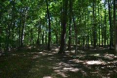 Ranków drzewa Obraz Stock