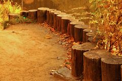 Rank of stumps for rest outdoors in autumn Stock Photos