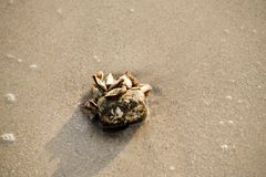 Rankenfußkrebsmeer bewohnt durch Meer stockfotografie