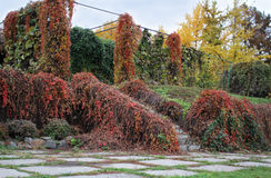 Rankor i Gryshko medborgarebotanisk trädgård Arkivbilder