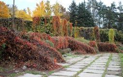 Rankor i Gryshko medborgarebotanisk trädgård Royaltyfria Bilder