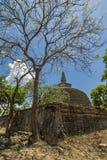 Rankoth Vehera Polonnaruwa, Шри-Ланка стоковые изображения
