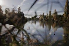Ranku światło nad Hyde parka Długim Wodnym stawem w zima sezonie obrazy royalty free