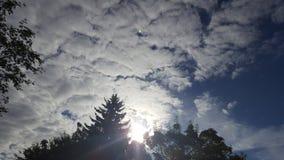 Ranku światło słoneczne Zdjęcie Royalty Free