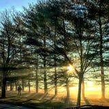 Ranku światło słoneczne Zdjęcia Royalty Free