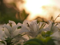 Ranku światło słoneczne Fotografia Stock