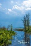 Ranku światło słoneczne na jeziorze Obrazy Royalty Free