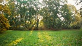 Ranku światło słoneczne przez drzew w późnym lecie z słońce promieniami i obiektyw migoczemy zbiory wideo