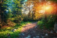 Ranku światło spada na lasowej drodze fotografia royalty free