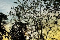 Ranku światło z drzewnym cieniem obrazy stock