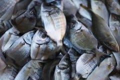 Ranku chwyt ryba Obraz Stock