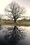 Ranku drzewo. Zdjęcie Stock