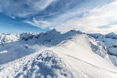 Ranku foto śnieżycy w wysokim Tatras Zdjęcie Royalty Free