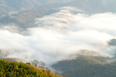 Ranku las i mgła Fotografia Stock