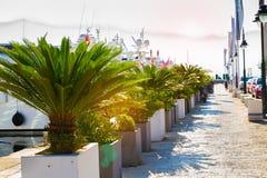 Ranku marina Denny molo i deptak, nadbrzeże w Budva, Montenegro Zdjęcie Stock