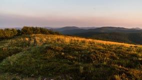 Ranku słońca światło nad migotanie trawą w góra czasu upływie zbiory