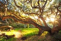 Ranku słońca światło przez drzewa Zdjęcia Royalty Free