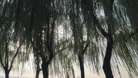 Ranku słońca lekcy filtry przez drzew w parku zbiory