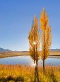 Ranku słońca połysk przez jesieni drzew Obrazy Stock