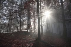 Ranku słońca promienie przez ciemnego lasu fotografia stock