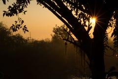 Ranku słońce błyszczy zdjęcia royalty free