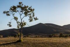 Ranku słońce na drzewie z Halnym szczytem w Chula Vista Fotografia Royalty Free