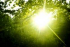 Ranku słońce w drewnie Fotografia Royalty Free