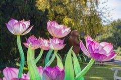 Ranku widok kolorowy lotosowy lampion blask księżyca las F obraz stock