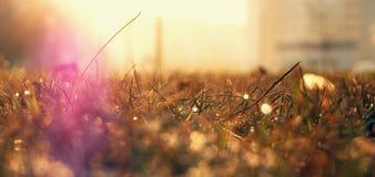 Ranku wschód słońca Zdjęcie Stock